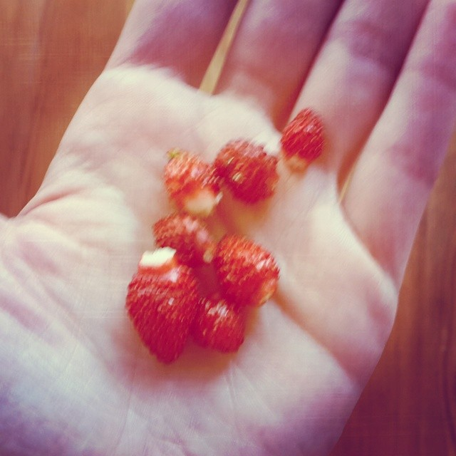 Pencere çilekleri :) Strawberries from our window-sill